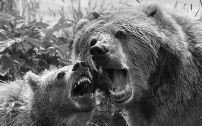 Stay calm when the bear prowls